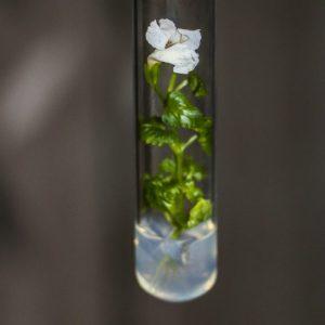 Цвете в епруветка